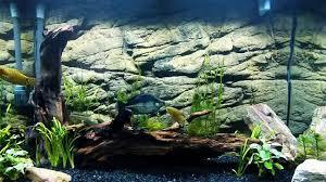 Aquarium Background Pictures Universal Rocks Crevice Style 3d Aquarium Background In Planted Tank