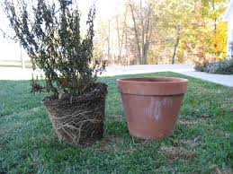 Bigger Really IS Better, Tips on Container Gardening