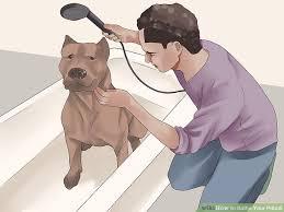 image titled bathe your pitbull step 1