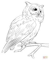 Barn Owl Line Drawing At Getdrawingscom Free For Personal Use