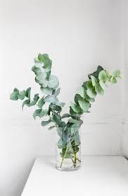 Best 25+ Bathroom flowers ideas on Pinterest   Rustic mason jars, Diy  bathroom inspiration and Mason jar plants