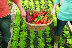 Image result for urban farming