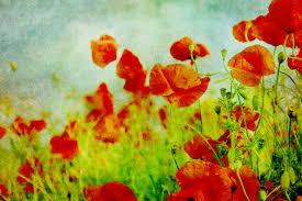 poppy fields painting