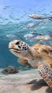 fish, sea, underwater 1080x1920 iPhone ...