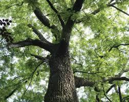 الجوز ، العناية بأشجاره .. وفوائده... - Agricultural Arts   فيسبوك