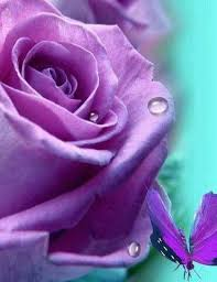 Myrna Sue McDaniel Obituary - Chesapeake, Virginia , Oman Funeral Home |  Tribute Arcive