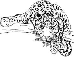 Leopard Coloring Pages New Leopard Print Coloring Pages Lurker