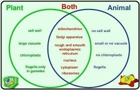 Organelles In Plant And Animal Cells Venn Diagram A Venn Diagram On Plant And Animal Cell Science The