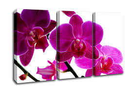flowers 3 panel pink orchid canvas art