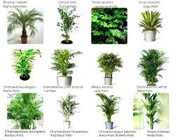 indoor ivy plants kinds of indoor plants names of houseplants with type of house plants types