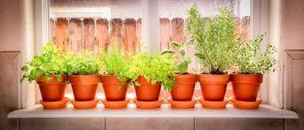 windowsill herb gardens aanmc