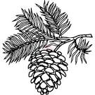Image result for pine cone clip art
