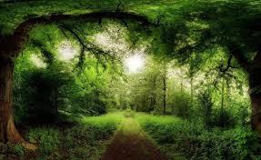 100 beautiful amazing nature hd wallpapers techstop