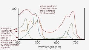 Action Spectrum 2 1 Essential Ideas 2 1 9 Photosynthesis