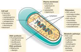 Mechanisms Of Antibacterial Drugs Microbiology
