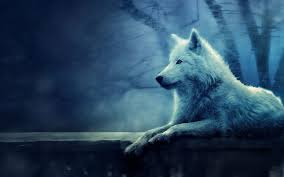 white wolf wallpaper. Modren Wolf White Wolf Wallpapers  Wallpaper Cave And