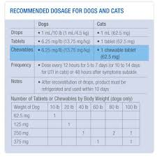 Azithromycin For Dogs Dosage Chart Clavamox Leading Veterinary Anti Infective Zoetis Us