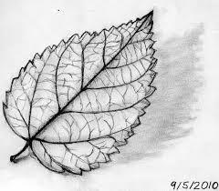 leaf drawing. leaf drawing - pesquisa do google