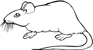 Small Picture Rat 19 coloring page Free Printable Coloring Pages