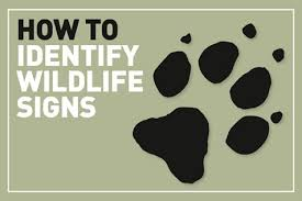 How To Identify Animal Tracks And Trails Discover Wildlife