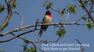 Bird Watching  Learn The Habits Of Backyard BirdBackyard Bird Watch