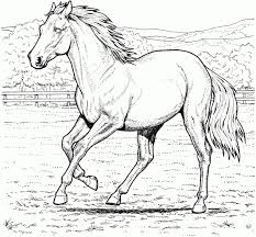 Coloriage De Cheval Au Galop Download Coloriage En Ligne Gratuit
