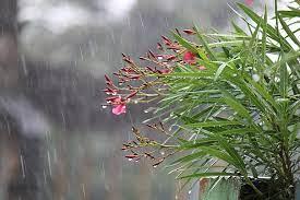 flowers rainy rain raining wet