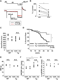 Ivabradine (iva) prolongs survival among dnNRSF‐Tg (Tg) mice. A,...    Download Scientific Diagram
