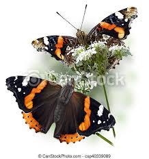 Odkryj atlanta icon stockowych obrazów w hd i miliony innych beztantiemowych zdjęć stockowych, ilustracji i wektorów w kolekcji shutterstock. Vanessa Atalanta Digital Illustration Of A Butterfly On A White Background Canstock