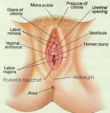Female masturbation techniques cli