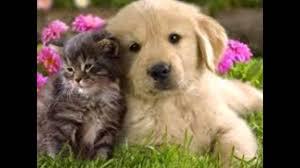 puppy and kitten cuddling. Perfect Kitten Kitten And Puppy Cuddling To Puppy And Kitten Cuddling O