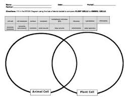 A Venn Diagram Of Prokaryotic And Eukaryotic Cells Prokaryote Eukaryote Animal Plant Cell Bio I Cells Prokaryotes