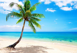 Image result for paradise beach photo