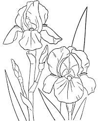 Spring Flower Coloring Pages For Kids Printable 5bratz Blog