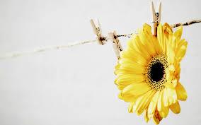 Yellow Mood yellowmood on topsy.one