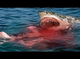 shark attack on humans.  Humans Great White Shark Attacks On Humans Caught On Tape For Attack E