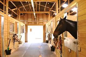 horses at the les