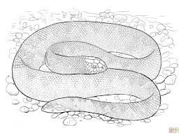 Small Picture Coloring Pages Snakes Coloring Pages Free Coloring Pages Snake