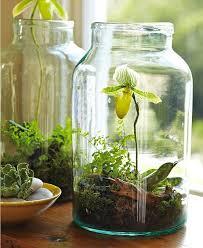 glass terrarium containers large designs