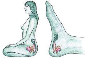 Afbeeldingsresultaat voor voetreflexologie en zwangerschap