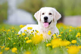 dogs wallpaper. Fine Dogs Dog Wallpaper Throughout Dogs 4