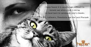 Cat Quotes Magnificent Best Cat Quotes R L LaFevers Hepper