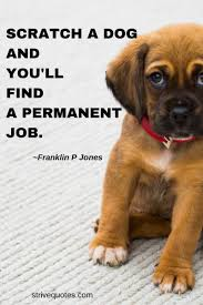 100 Funny Inspirational Pet Quotes And Sayings Mindbootstrapcom