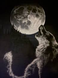 black and white wolf howling photography.  Howling Black And White Wolf Howling Pictures  Photo8 With And White Wolf Howling Photography W