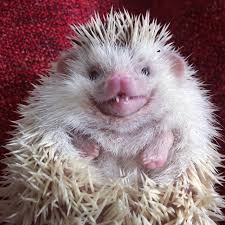 Rodents Lower Classifications Hedgehogs Of Asgard Hedgehogs Are Not Rodents