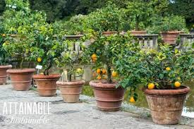 consider growing fruit trees in pots or as part of your front yard landscape