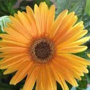 Bernadette Burch (bernieburch) - Profile   Pinterest