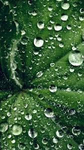 my46-water-drop-on-leaf-summer-green ...