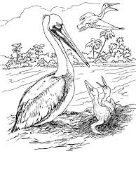 Small Picture Pelican coloring pages Download and print Pelican coloring pages