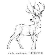 Deer Elk Stock Vectors Images Vector Art Shutterstock